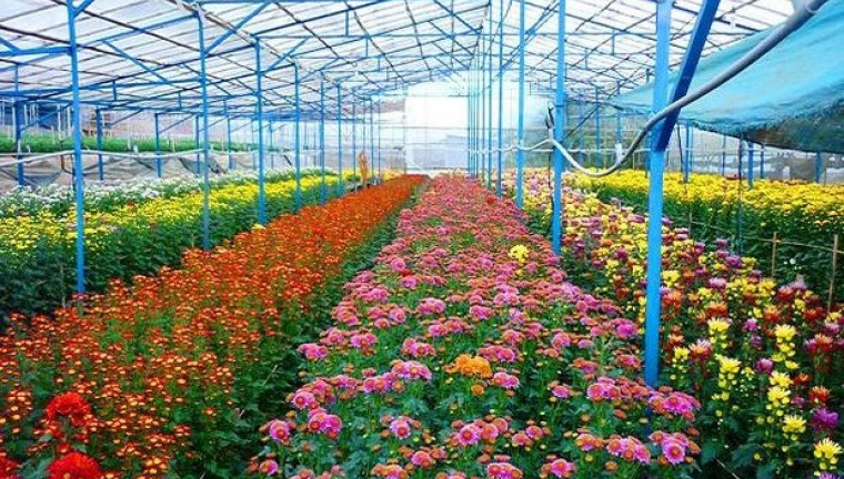 langbiang-flower-vegetable-farm-dalat-guide-review-attractions-maps-address-2-760x432